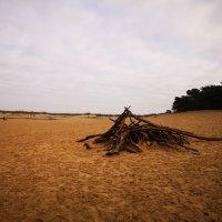 Loonse en Drunense duinen en de Efteling