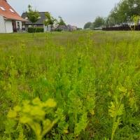 Review: Landal Nieuwvliet-bad